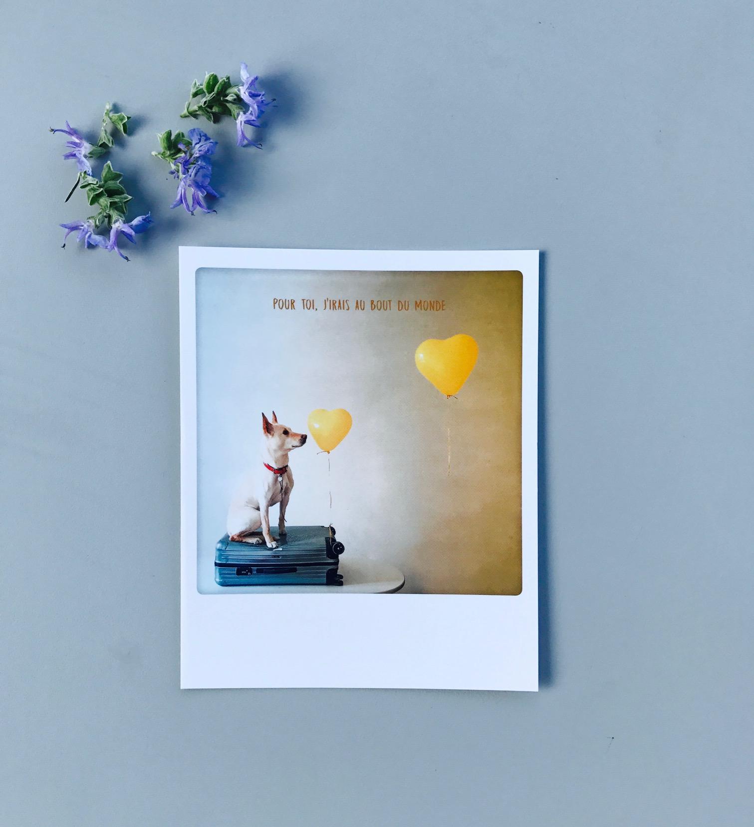 carte postale polaro d pour toi j 39 irai au bout du monde de pickmotion m m g teaux. Black Bedroom Furniture Sets. Home Design Ideas